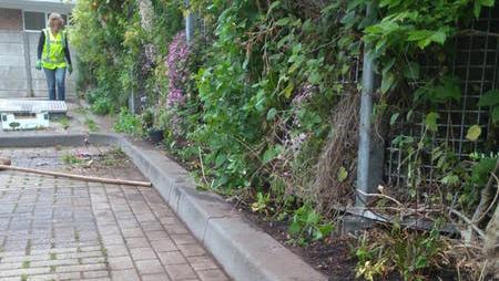 2019_05_23 onderbeplanting bloemstraat 2 _16-9