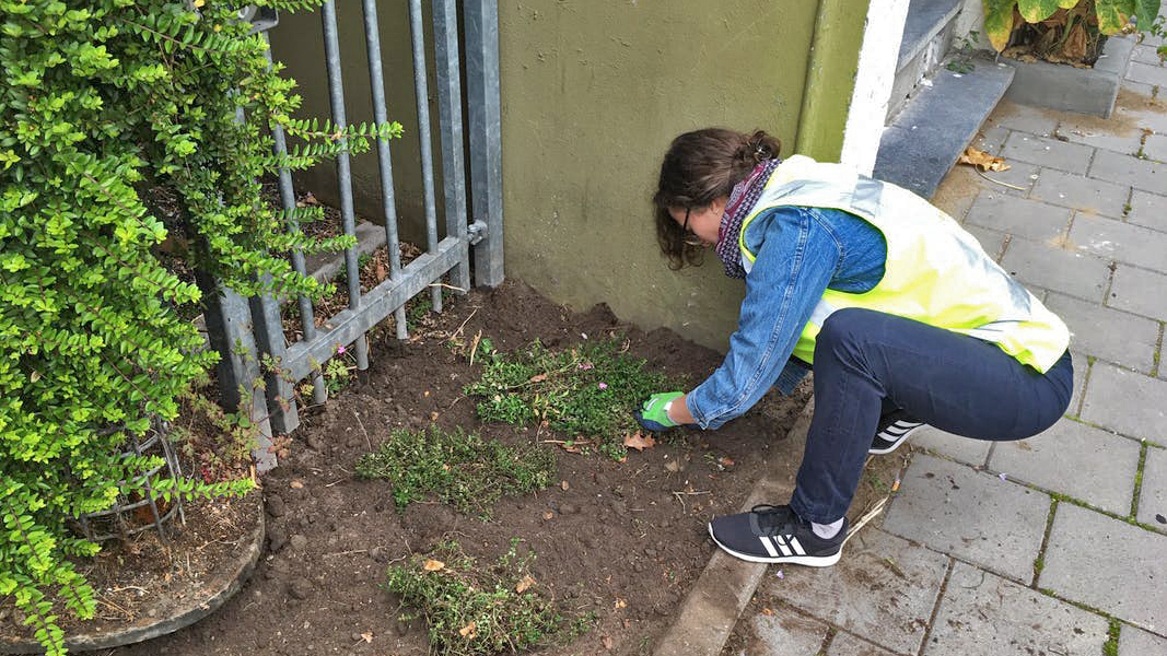 2019_05_23 onderbeplanting bloemstraat 3 _16-9