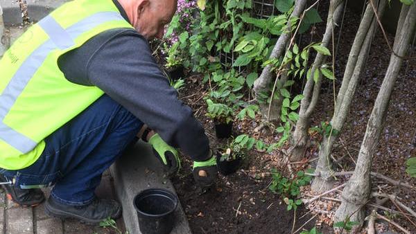 2019_05_23 onderbeplanting bloemstraat 4 _16-4