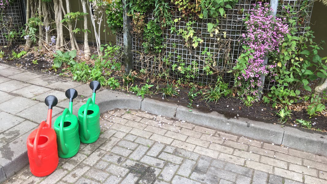 2019_05_23 onderbeplanting bloemstraat 5 _16-9