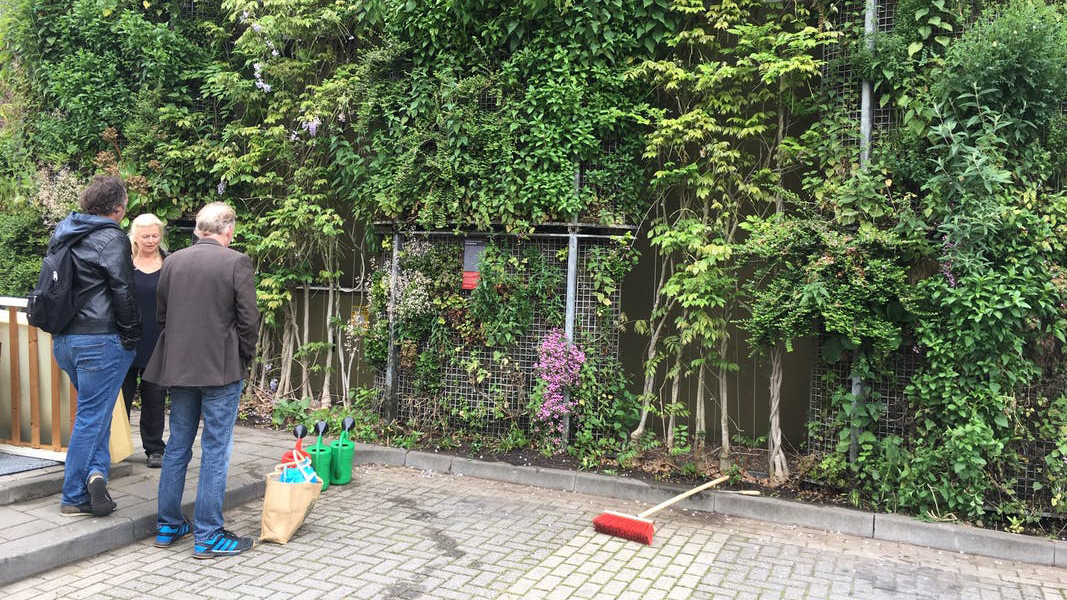 2019_05_23 onderbeplanting bloemstraat 6 _16-9